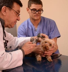 pet nurse and rehabilitation care